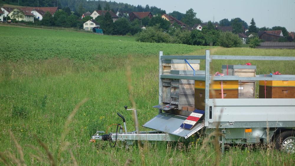 Der Blick zum Dorf Thalheim.