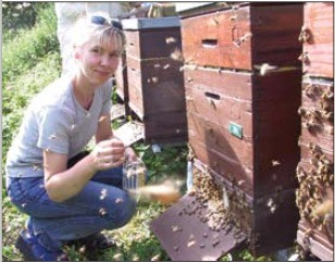 Sanftmütige Bienen