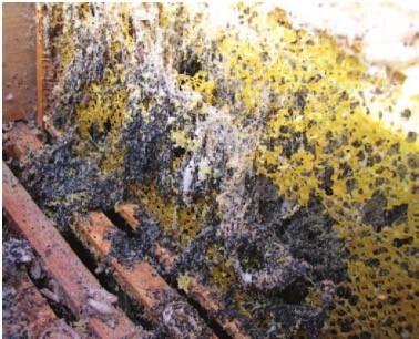 Wachsamotten zerstören Waben