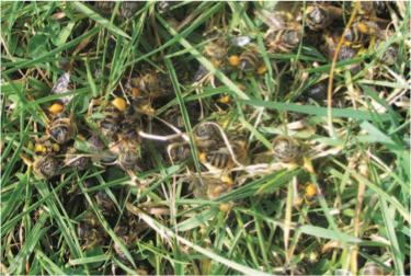 Verendete Pollensammlerinnen