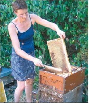Honigwabe abwischen