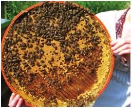 Varroabekämpfung mittels Drehbeute