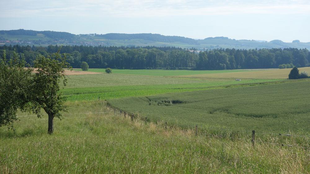 Die Umgebung von Thalheim an der Thur ist wunderschön.