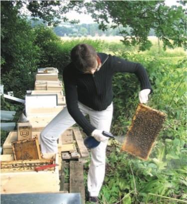 Varroa Bekämpfung