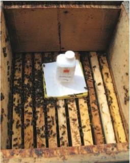 Ameisensäure Behandlung