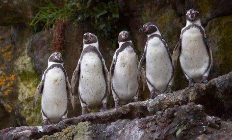 Pingüinera Puñihuil Ancud Chiloé