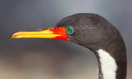 Salida al santuario de aves Caulin Ancud Chiloé