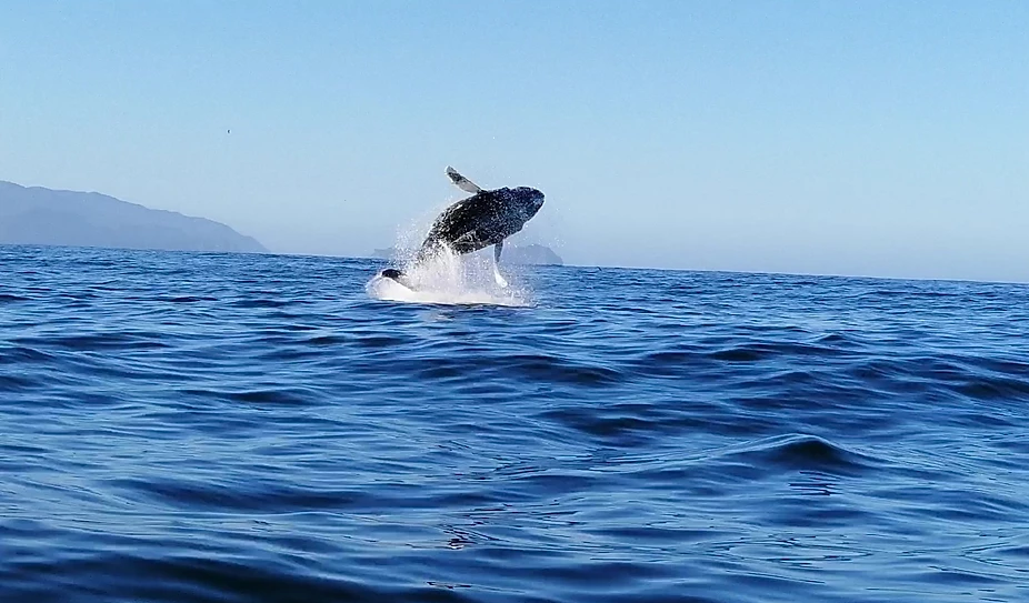Whale watching in Ancud Chiloé