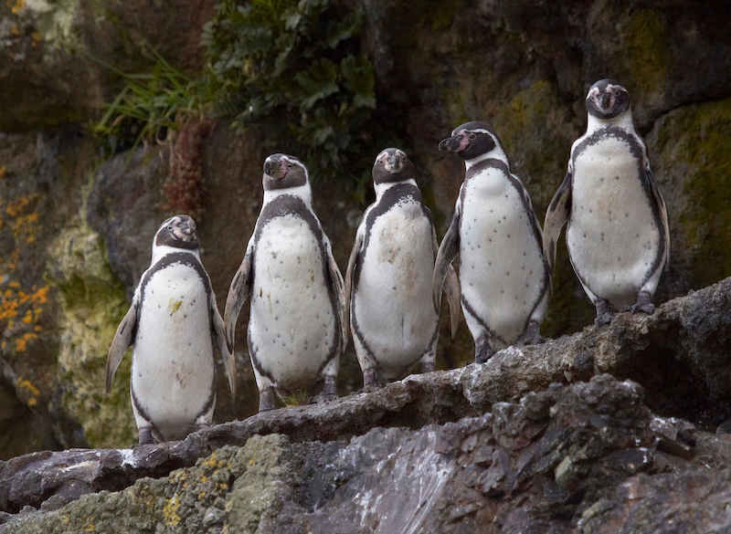 Excursion to penguin colony Chiloé
