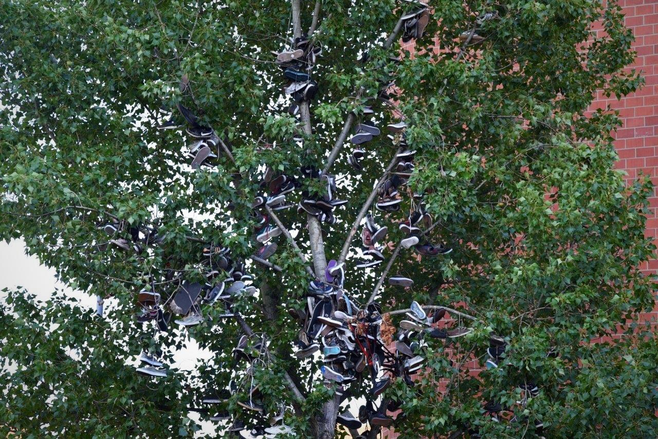 Der legendäre Skaterschuh Baum, alle alten, kaputten Schuhe der Skater hängen dort