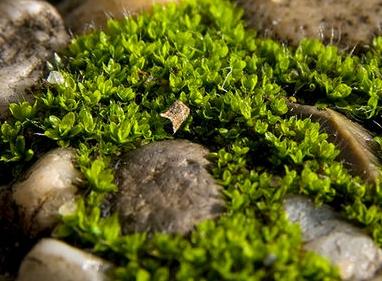 Bild: Milr aus dem Bayerwald