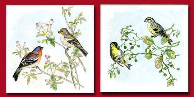 Oiseaux pinsons des arbres et tarins des aulnes