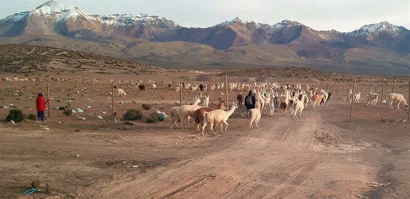 Grenzland Chile/Bolivien auf 3800müM