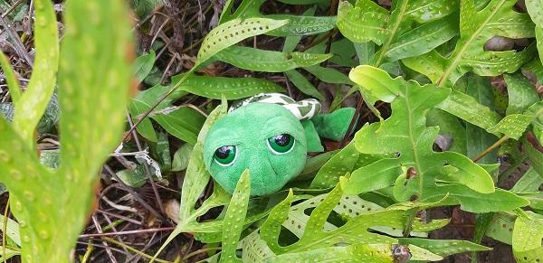 Guapi, die kleine Schildkröte