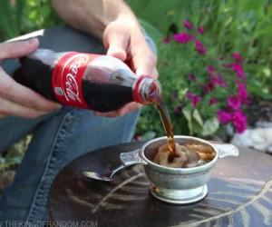 coca-cola helada the king of random invertirenfamilia.com