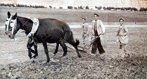 Campesinos españoles en los duros años 40.