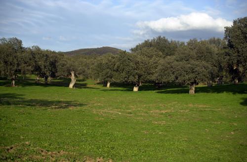 Sierra Morena. Picos de Aroche.