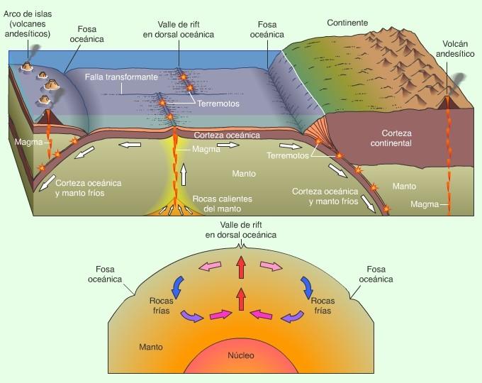 Esquema fundamental de la corteza oceánica y su relieve subamarino.
