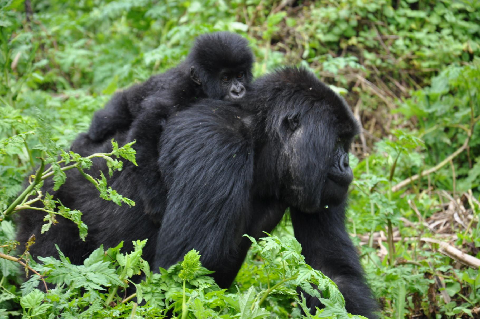 Sites de rencontre rwanda
