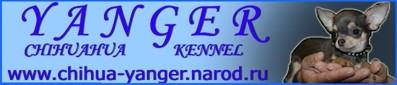 банер сайта Янгер
