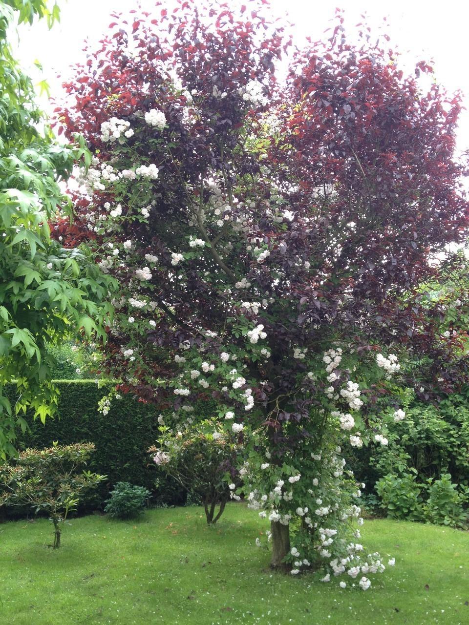 Paysagiste jardi proxi bondues entretien de jardins for Entretien jardin 93