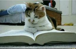 Ах какая красота! Научил читать кота!