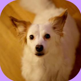 chien dog mascotte égérie