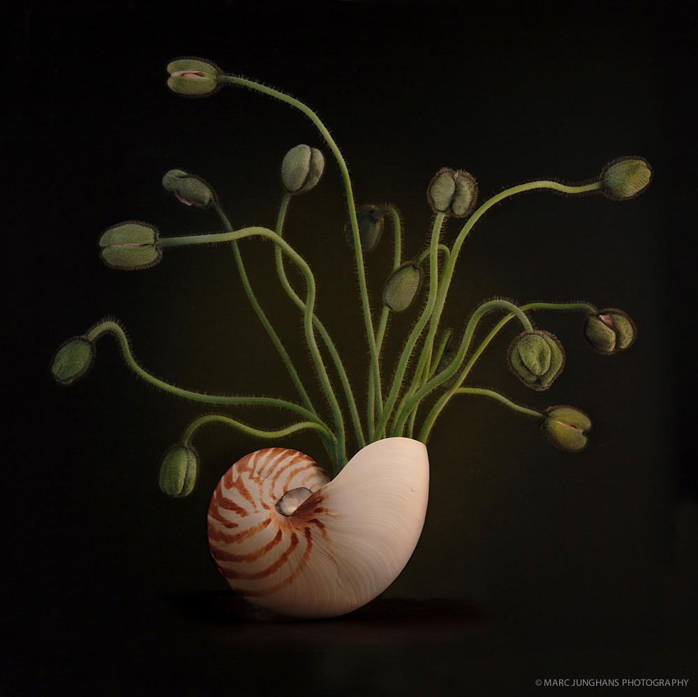 Bild fauna floralis, 2013, Ultrachrome K3 Pigmentdruck, Auflage 10 + 2 E.A., 100 x 100 cm, Marc Junghans Fotografie