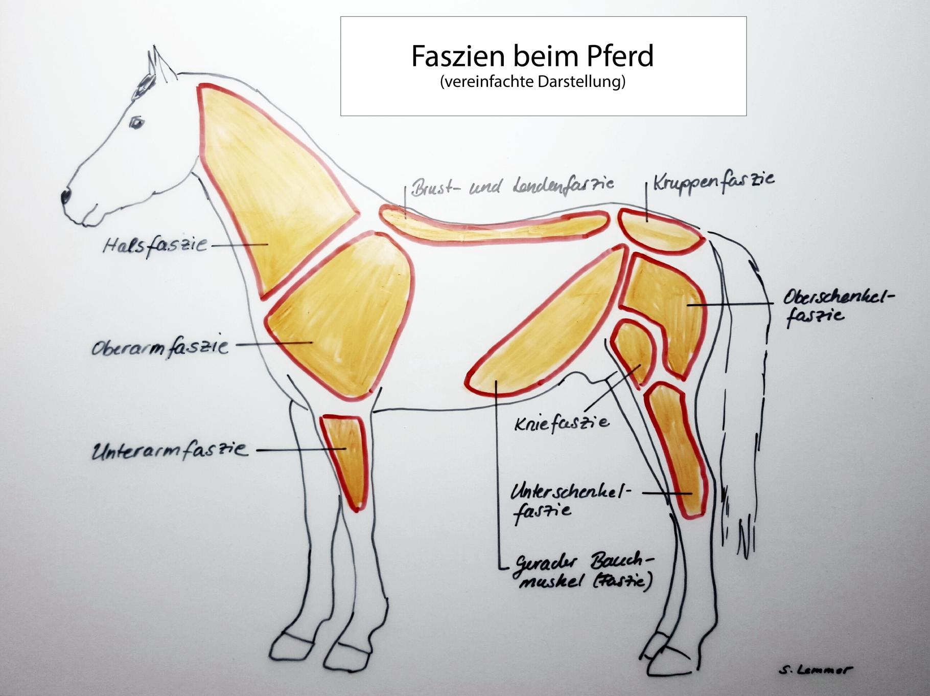 Gemütlich Brust Anatomie Muskel Bilder - Menschliche Anatomie Bilder ...