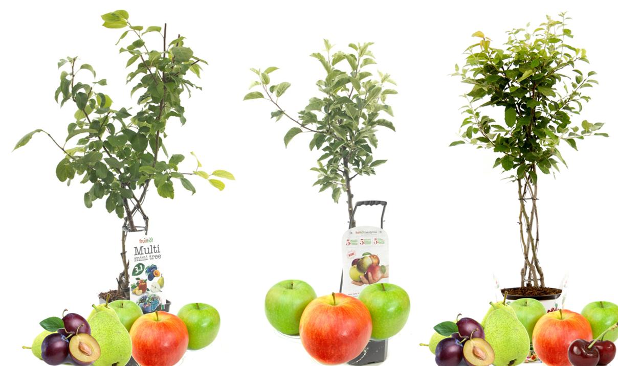 Obstbäume mit verschiedenen Früchten