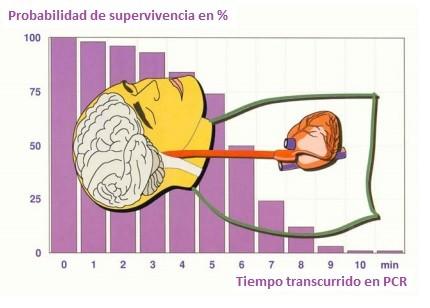 Probabilidad de sobrevivir según el tiempo transcurrido sin realizar RCP