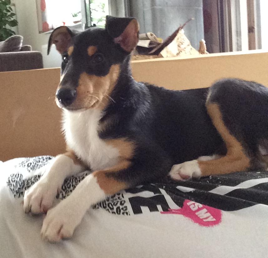 Daia in den ersten Wochen bei uns. Sie liegt gerne direkt auf ihren Menschen.