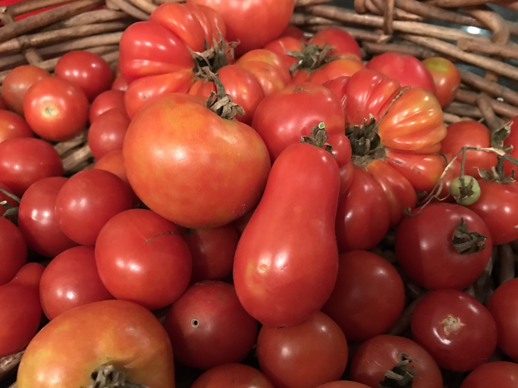 Pot luck: Growing successful container tomatoes.