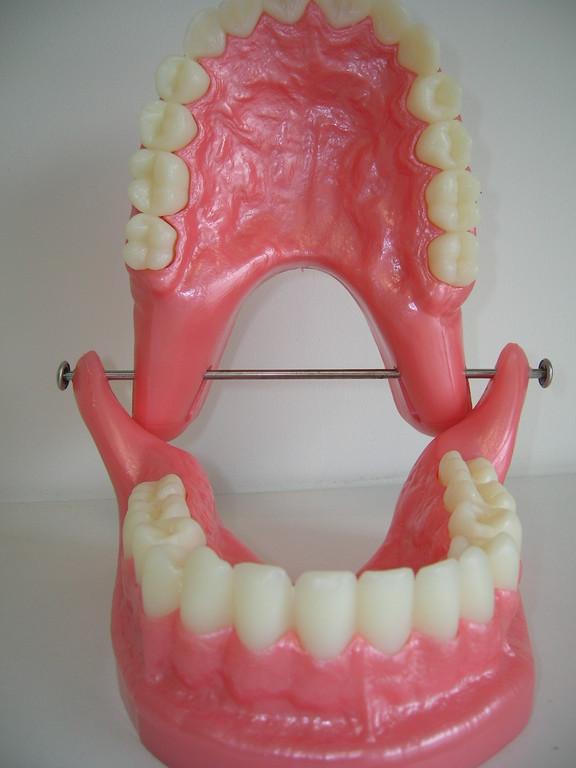 Quelle belle dentition!
