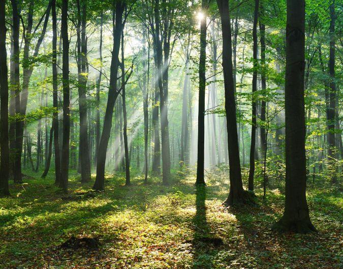 Entwerfen und Herstellung von Forstmaschinen