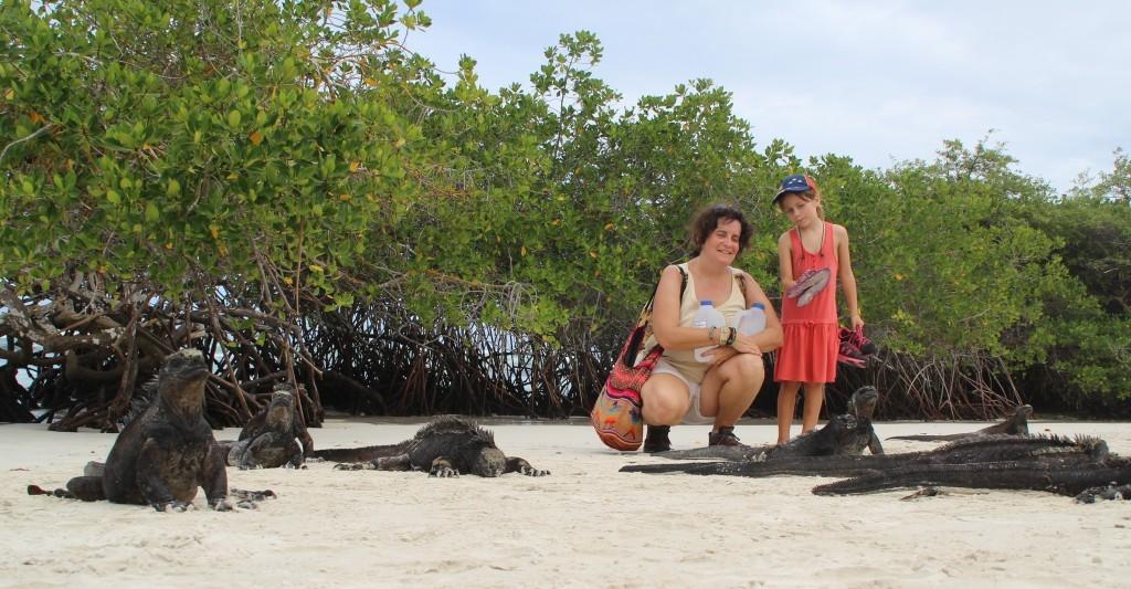 les iguanes de mer