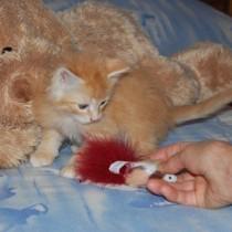 Hector (3 mois)
