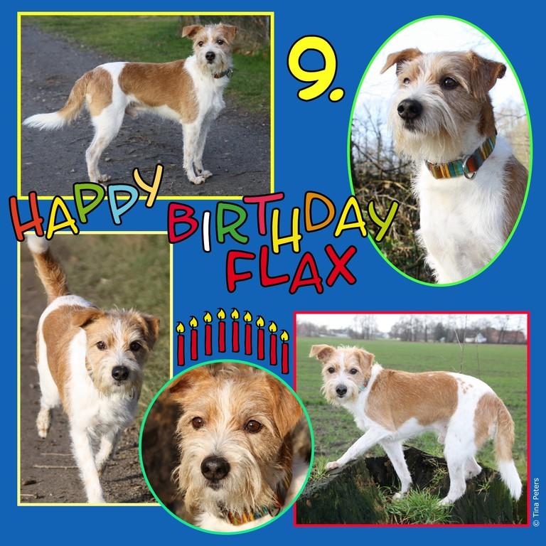21. Januar 2012, Flax hat Geburtstag ;-)