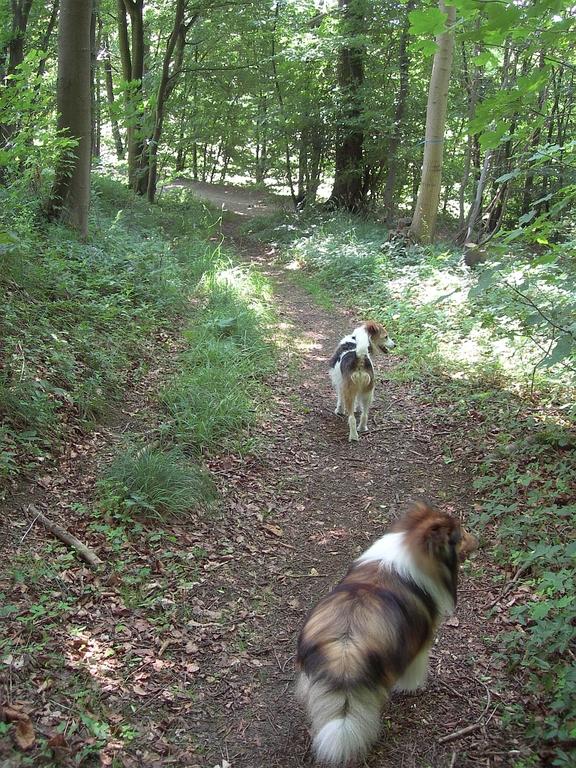 Frisbee und Nicki im Harz