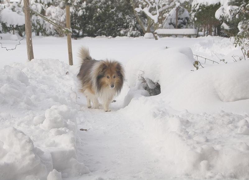 Nicki zuhause im Schneegarten