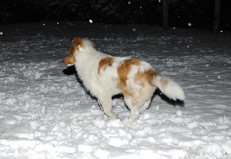 Amarettos erster Schnee