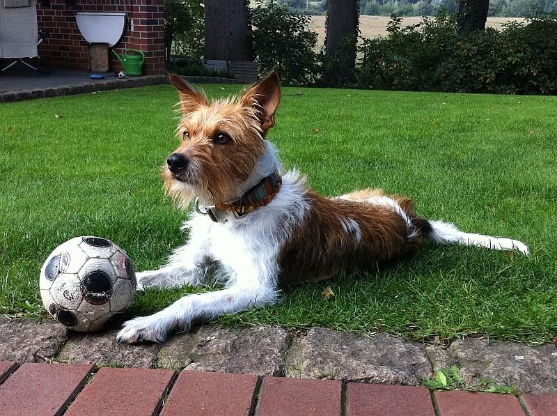 """""""Mein Ball, mein Garten, ALLES meins!"""""""