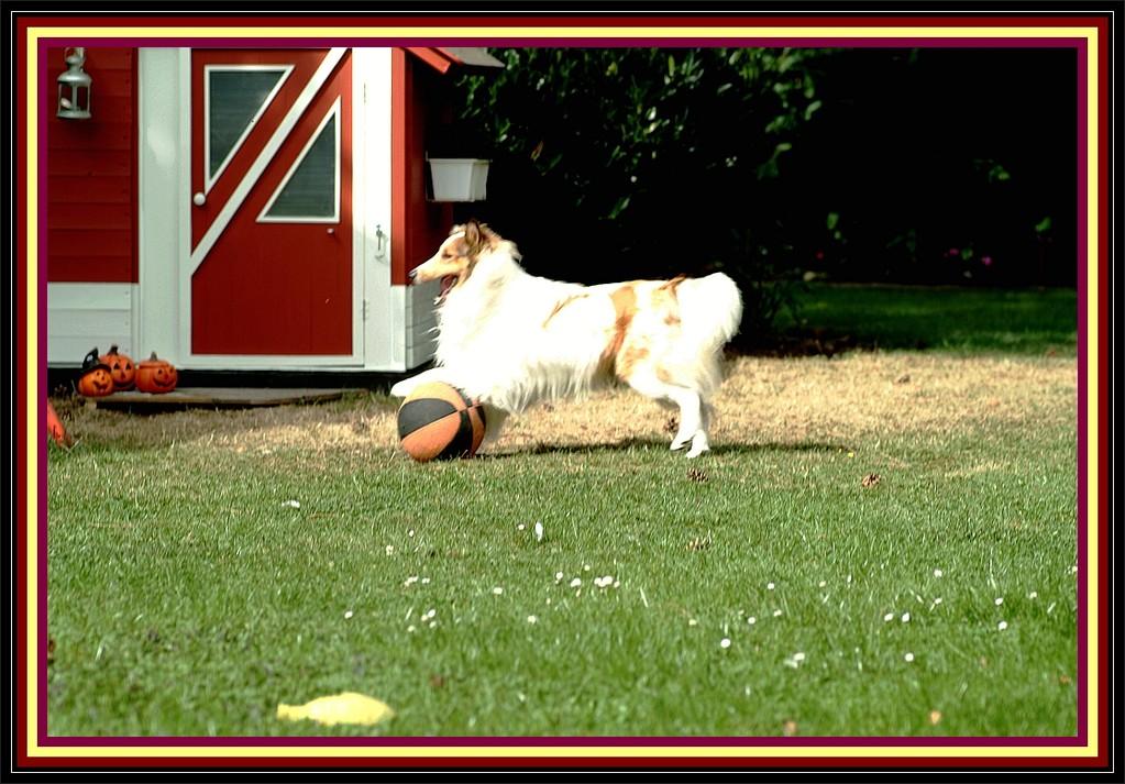 """Retti:"""" Friiiitz, komm endlich raus aus dem Haus, lass´ uns Ballspielen!!!"""""""