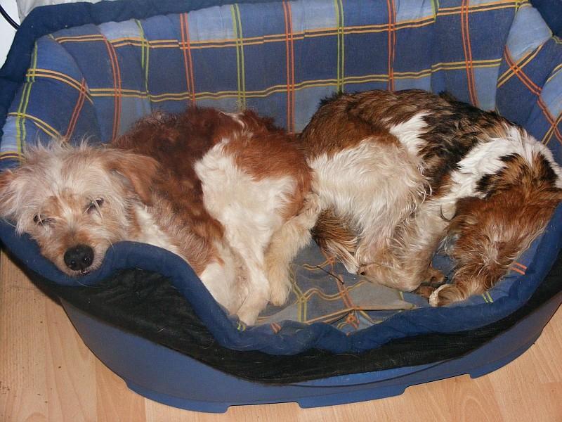 16.02.2008  Nauka & Sophie zusammen im Körbchen