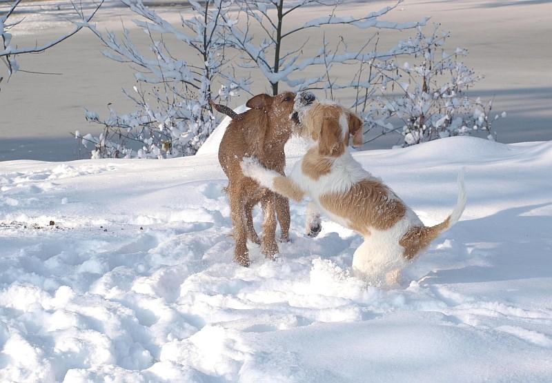 30.11.2010  Viva & Grace toben im Schnee