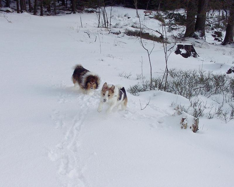 Nicki und Frisbee im Harz