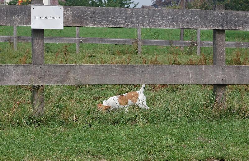Bitte nicht füttern!  Fritz auf der Weide  ;-)