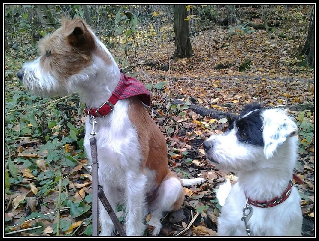Rosi und ich im Wald