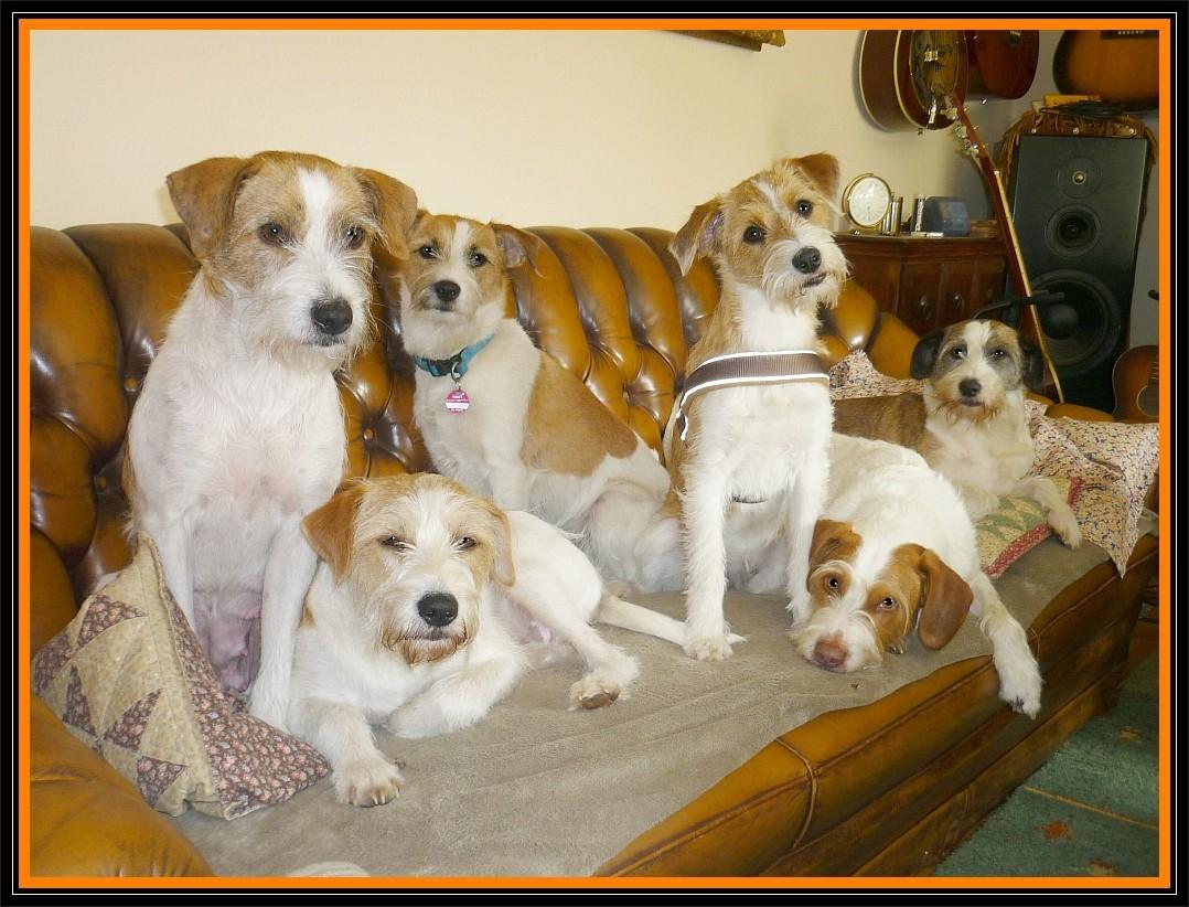 16. Mai 2012, Abraxa, Adele, Clara, Crispy, Billy & Jule besetzen das Sofa ;-)