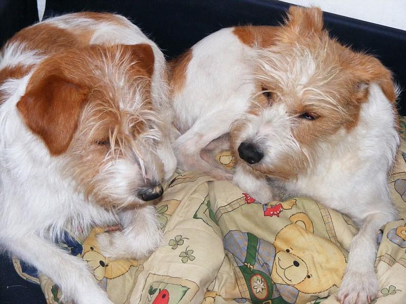 09.04.2008  Katla & Tara zusammen auf der Liege